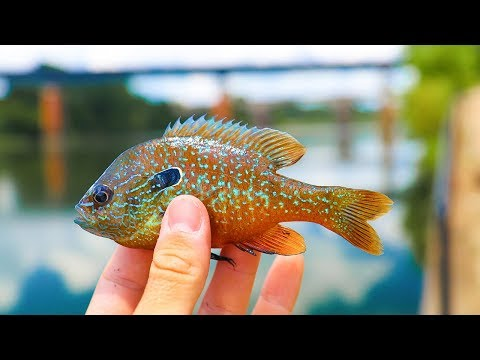 Thumbnail: Micro Lure Challenge for Tropical fish!!! (Exotic)
