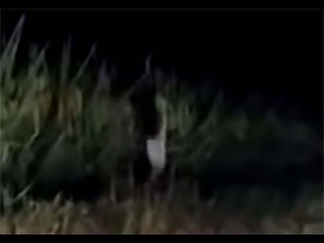 Vídeo muestra una extraña criatura humanoide corriendo junto a una carretera