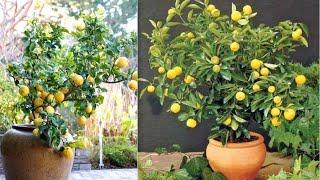 Dicas Para A Frutífera Dar Muitos Frutos