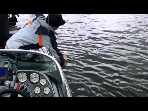 Walleye and Perch in New Jersey - Lake Hopatcong
