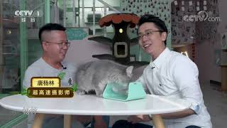 [正大综艺·动物来啦]猫为何要用这种方式喝水| CCTV