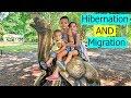 Homeschool Educational Field Trip-  Hibernation, Migration, and Adaptation (Science Curriculum)