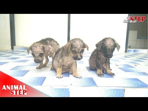Neglected Puppies Found In A Pagoda With Severely Malnourished Have Been Saved