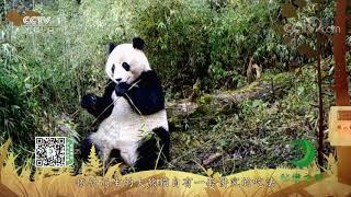 《秘境之眼》 大熊猫 20210102| CCTV - YouTube