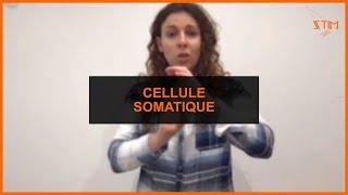 Cellulaire Cellule somatique