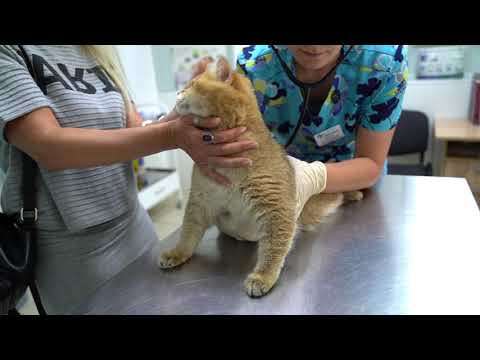 A trip to the veterinary clinic