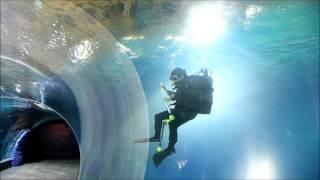 Afrykarium Oceanarium ZOO Wrocław - Wielkie Testowanie (płaszczki, rekiny, egzotyczne ryby)