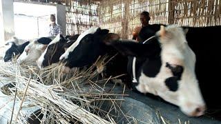 Cow farm / খামার করতে বকনা বাছুরের দাম জানুন / BD Life Trailer