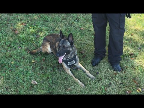 Pet Central - A Police K9 found a missing 3 year old boy in just 10 minutes