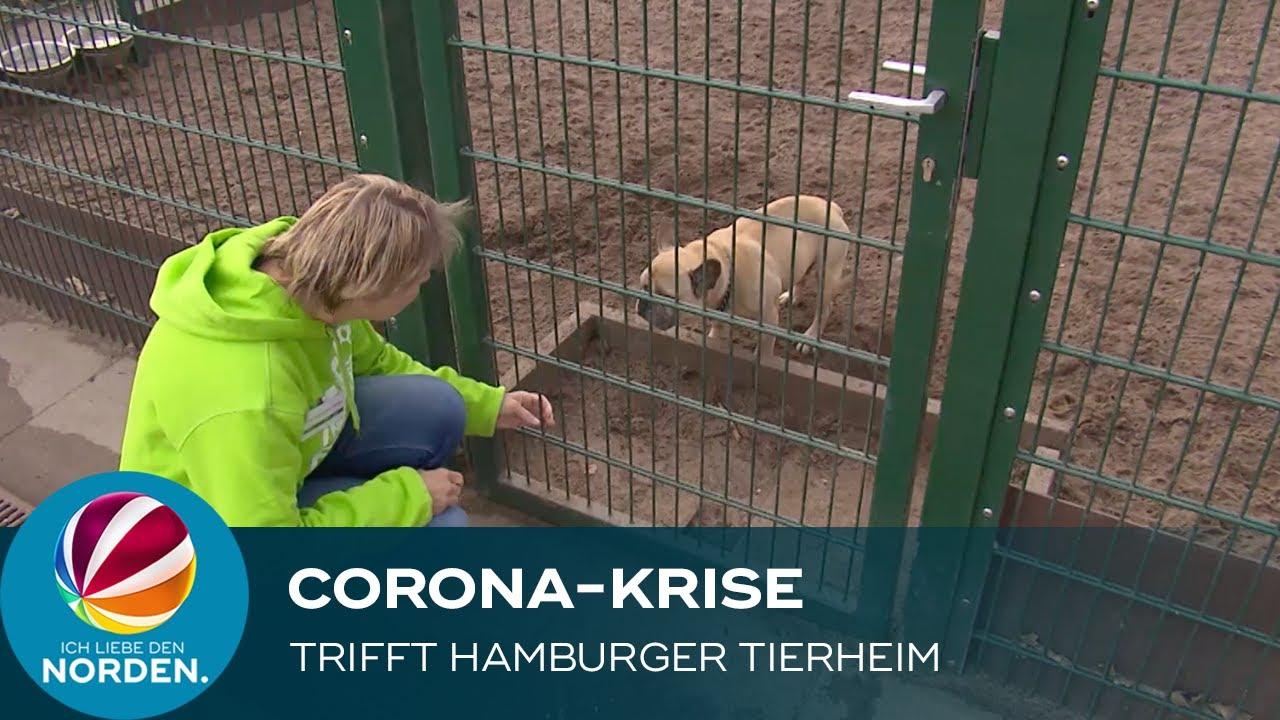 Corona Tierheim