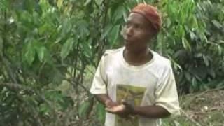 Baixar TV FACE - Gente que faz - Colheita do cravo