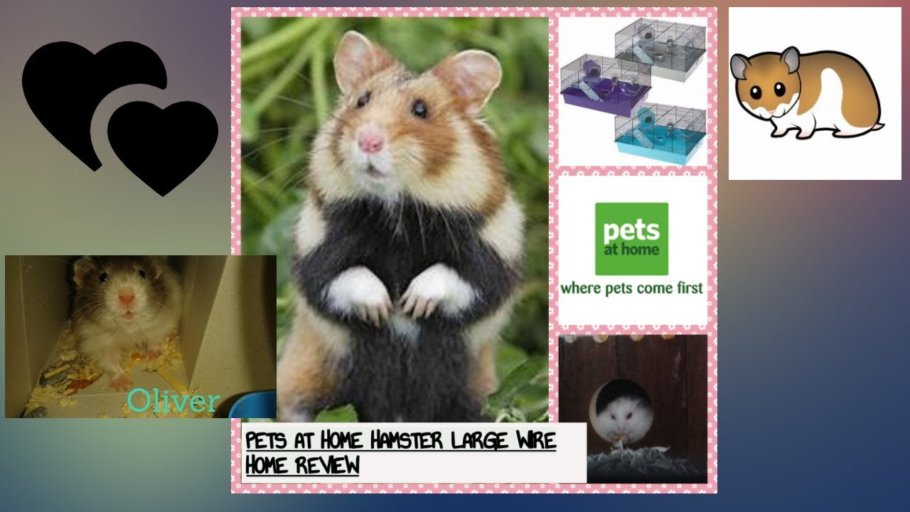 Review Of The Pets At Home Hamster Wire Cage Youtube