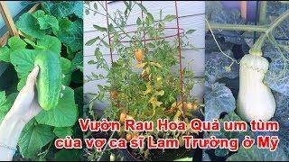 Vườn Rau Hoa Quả um tùm của vợ ca sĩ Lam Trường ở Mỹ