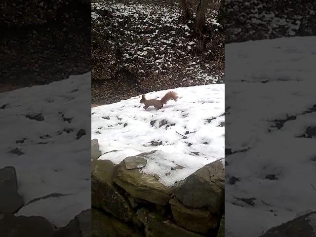 Белочка в лесу прибежала за орешками