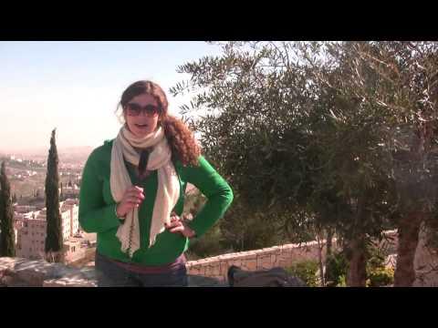 Sara Heal Volunteers in Kibbutz Yechiam