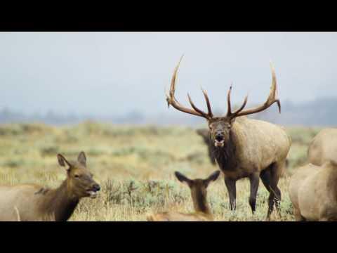 Protecting Antelope Flats  Wyoming Governor Matt Mead HD