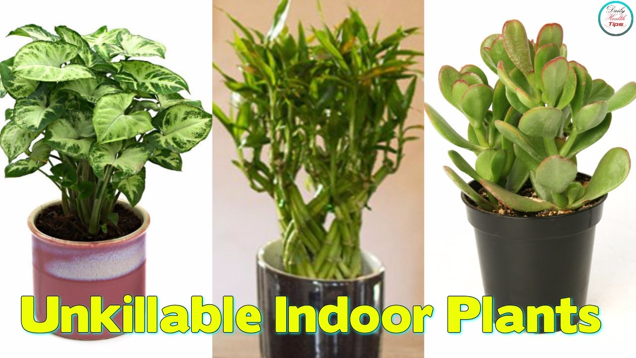 Best Unkillable Indoor Plants Daily Health Tips