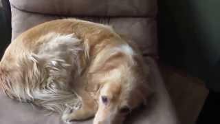 Review of Dog Deshedding Brush by Melissa