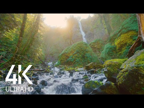 Relaxing Sound Of A Mighty Waterfall With Birds Chirping Around - White Noise For Sleep 8 HOURS