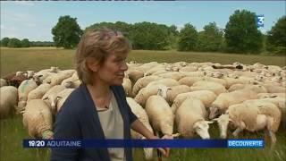 Dordogne : la bergère de la Vallée de l'Isle