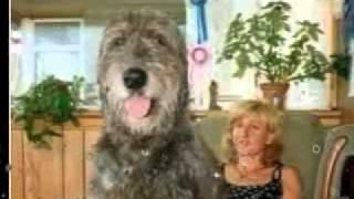 Największe psy na Ziemi!:D