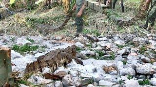 Release of a Crocodile !