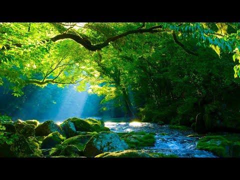 Entspannungsmusik Harfe mit Wald und Wasser - Einschlafmusik