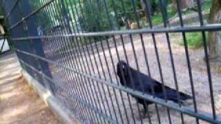 Worms, Germany - Tiergarten (Zoo) Video 12
