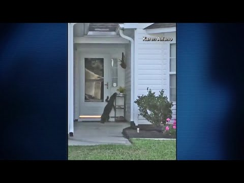 Scott Sloan - VIDEO: An Alligator Comes Knocking on this Myrtle Beach Home