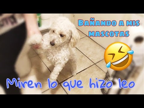 Como Baño A Mis Mascotas - Miren Lo Que Hizo Leo