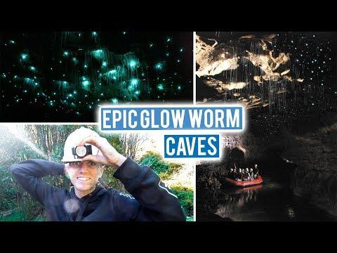 New Zealand North Island Road Trip Begins | Waitomo Glow Worm Caves to Surfing in Raglan | Wild Kiwi