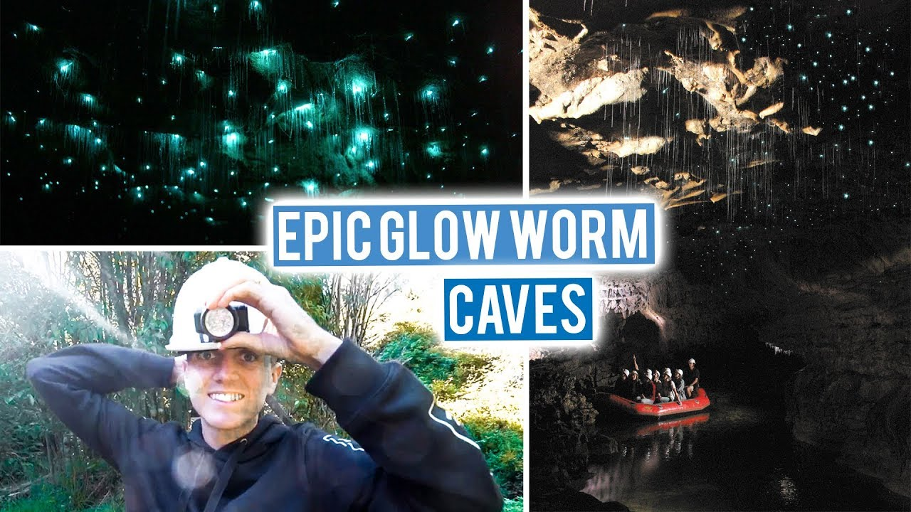 New Zealand North Island Road Trip Begins   Waitomo Glow Worm Caves ...