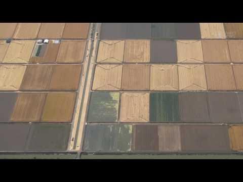 岡山で麦畑がパッチワーク模様に