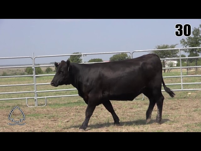 Pearcy Angus Ranch Lot 30