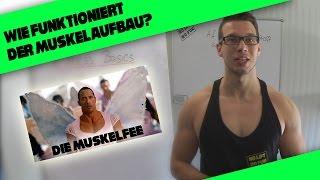 Wie funktioniert der Muskelaufbau? | Fitness Basics