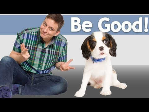 How to Teach your Dog to Be Good around ANYTHING!