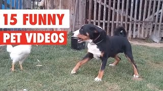 15 Funny Pet Videos Compilation 2016
