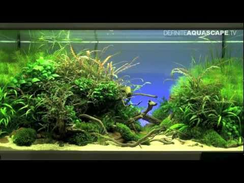Aquascaping - The Art of the Planted Aquarium 2012, part 1