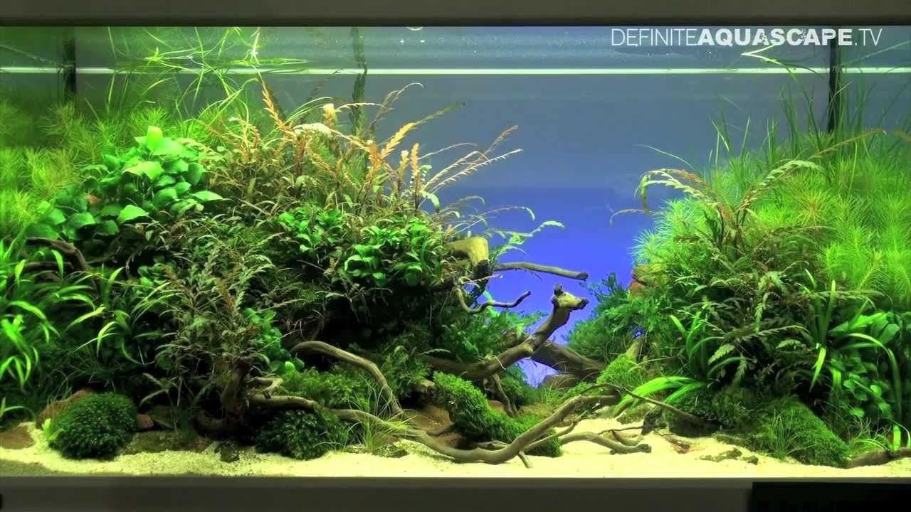 Great Aquascaping   The Art Of The Planted Aquarium 2012, Part 1   YouTube