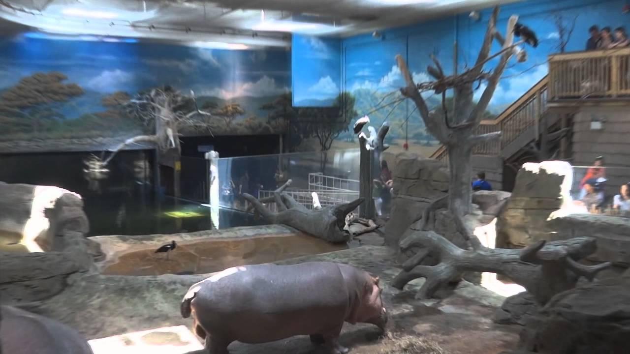 Adventure Aquarium - Camden, NJ - YouTube