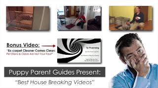 Housebreaking A Puppy House Training