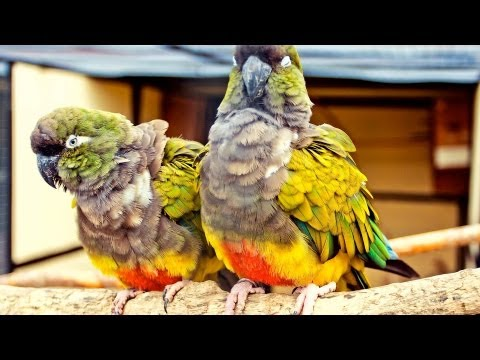 How to Know If Your Bird Is Sick | Pet Bird