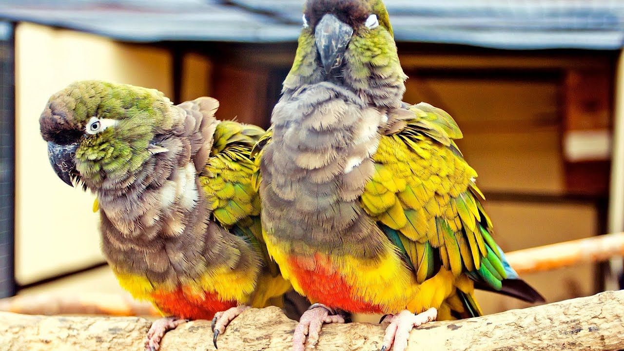 How To Know If Your Bird Is Sick Pet Bird Youtube