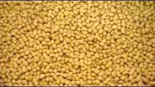 как производится НАСТОЯЩИЙ СОЕВЫЙ соус?