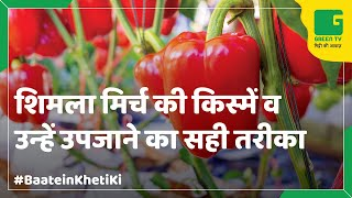 Capsicum Farming (शिमली मिर्च की खेती) In Baatein Kheti Ki - On Green TV