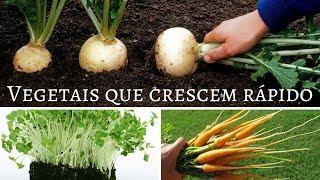 9 Vegetais que Crescem em Menos de 2 Meses