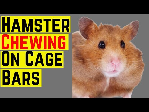 hamster-chewing-on-the-cage-bars-♥️