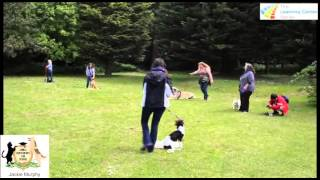 Dog Training And Agility