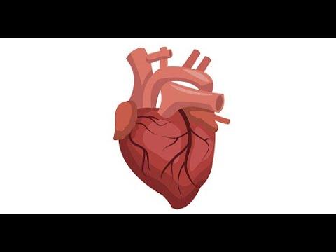 گفتگو با پروفسور مداحی متخصص قلب و خطرات ناشی از سکته قلبی در تلویزیون امید ایران