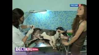 Кошки и собаки воюют с электроникой